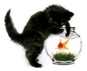 Cats & Fish...