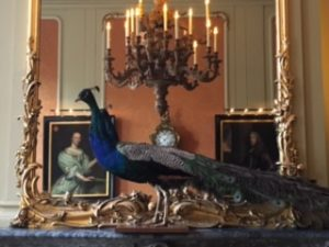 Bet you thought I'd post a photo of me dancing in costume, but I stumbled upon this peacock in a canal house museum in Amsterdam and loved him.